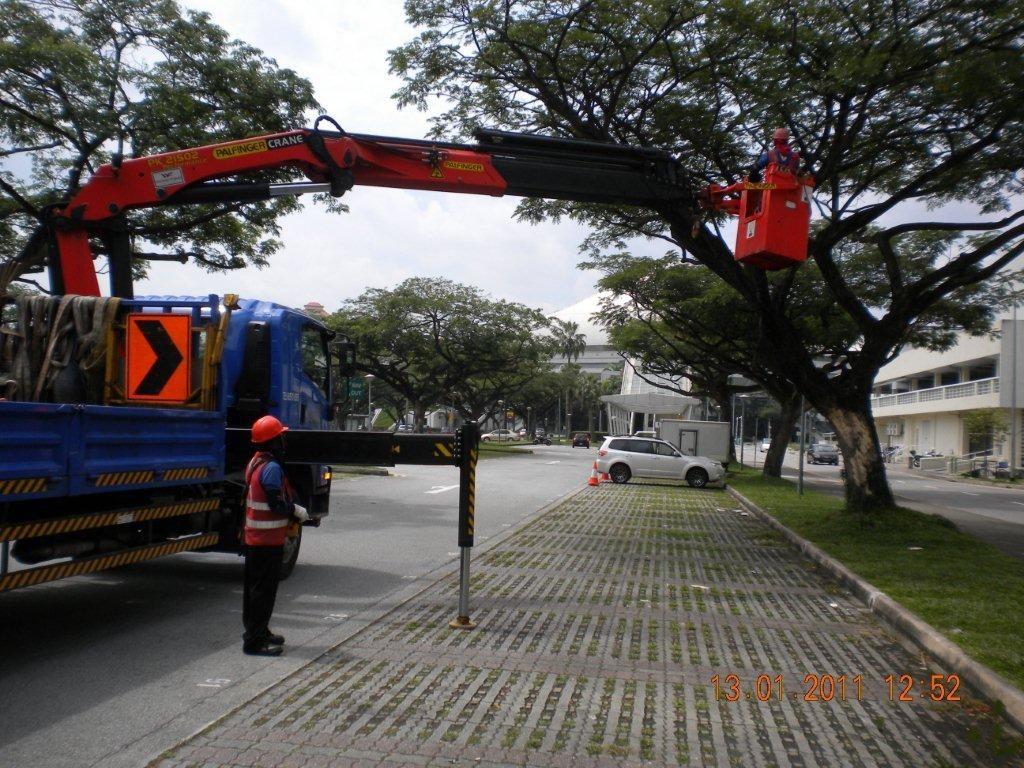 Tree Cutting Singapore Tree Pruning Singapore Tree Removal